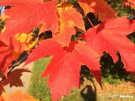 Fall leaves & me
